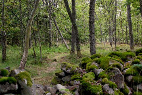 tärnö sweden forest